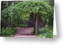 Zilker Botanical Tree Arbor Greeting Card by Kristina Deane