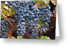 Zinfandel Wine Grapes Greeting Card by Charlette Miller