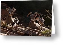 Zion National Park Mountain Sheep Checkerboard Mesa Utah Greeting Card by Robert Ford