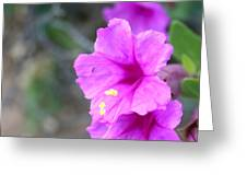 Arizona Wildflower Greeting Card by Sharon Mick