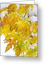 Autumn Snow Portrait Greeting Card by James BO  Insogna
