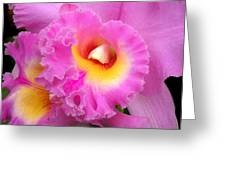 Cattleya Orchid 1 Greeting Card by Julie Palencia