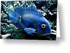 Fish living in Denmark Greeting Card by Colette V Hera  Guggenheim