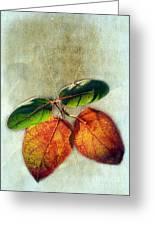 Memory Of Leaves Greeting Card by Judi Bagwell