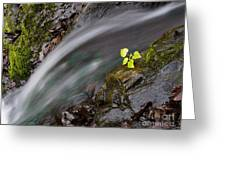 River Greeting Card by Odon Czintos