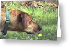 Sighthound At Work Greeting Card by Patty Gross