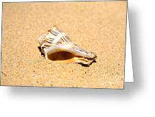 Whelk Sea Shell Greeting Card by Cheryl Young