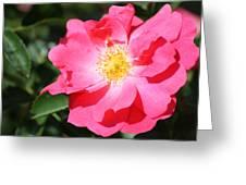 06182012 012 Greeting Card by Mark J Seefeldt