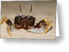 A Crab On The Shore Greeting Card by Ulrich Schade