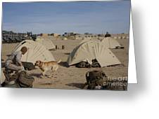 A Dog Handler And His Military Working Greeting Card by Stocktrek Images