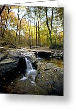 A Woodland View At Long Branch Nature Greeting Card by Rex A. Stucky