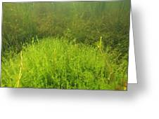 Algae Greeting Card by Alexis Rosenfeld