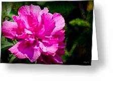 Althea Blossom Greeting Card by Barry Jones
