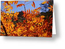 Arizona Fall Greeting Card by David Rizzo