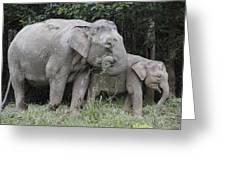 Asian Elephant Elephas Maximus Mother Greeting Card by Hiroya Minakuchi
