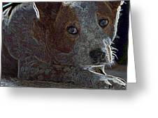 Australian Cattle Dog Greeting Card by One Rude Dawg Orcutt