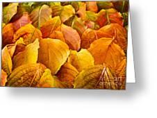 Autumn Leaves  Greeting Card by Elena Elisseeva