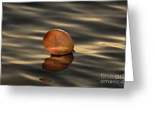 Balloons On The Water Greeting Card by Odon Czintos