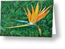 Bird Of Paradise Greeting Card by Charles Yates