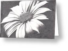Black And White Flower Greeting Card by Amanda Rhone