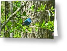 Blue Bird Of Happiness  Greeting Card by Debra     Vatalaro