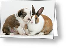 Border Collie Pup With Dutch Rabbit Greeting Card by Jane Burton