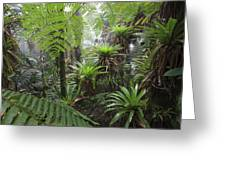 Bromeliad Bromeliaceae And Tree Fern Greeting Card by Cyril Ruoso