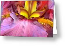 Burgundy Iris Greeting Card by Randy Rosenberger