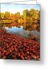 Burst Of Colors Greeting Card by Catherine Reusch  Daley