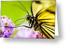 Butterfly Greeting Card by Sebastian Musial