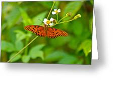 Butterfly Greeting Card by Wild Expressions Photography