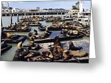 California Sea Lions Greeting Card by Alan Sirulnikoff