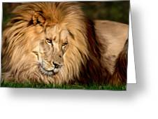 Cameron Greeting Card by Big Cat Rescue