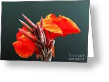 Canna Greeting Card by Addie Hocynec