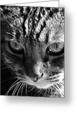 Cats Eyes Greeting Card by Dyana Rzentkowski