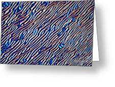 Cholesteric Liquid Crystals Greeting Card by Michael Abbey and Photo Researchers