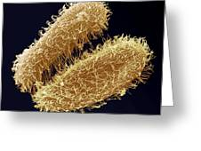 Ciliate Protozoa, Sem Greeting Card by Steve Gschmeissner