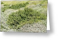 Coastal Vegetation Greeting Card by Adrian Bicker