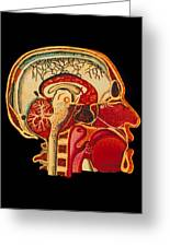 Coloured Illustration Of Sectioned Brain In Head Greeting Card by Mehau Kulyk