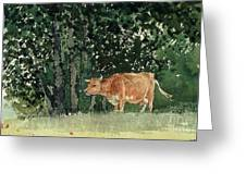 Cow In Pasture Greeting Card by Winslow Homer
