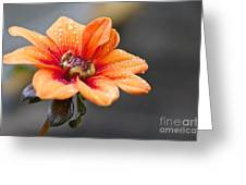 Dahlia In The Mist Greeting Card by Sean Griffin