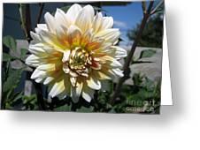 Dahlia Named Peaches-n-cream Greeting Card by J McCombie