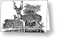 Deer Greeting Card by Granger