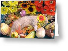 Di Milo - Flower Child - Kitty Cat Kitten Sleeping In Fall Autumn Harvest Greeting Card by Chantal PhotoPix