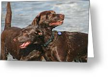 Dogs On The Beach Greeting Card by Valia Bradshaw