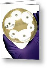 E. Coli Bacteria Sensitivity Test Greeting Card by Doncaster And Bassetlaw Hospitals