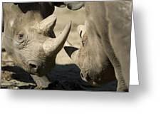 Eastern Black Rhinoceros Greeting Card by Joel Sartore