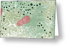 Endoplasmic Reticulum Greeting Card by Omikron
