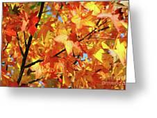 Fall Colors Greeting Card by Carlos Caetano