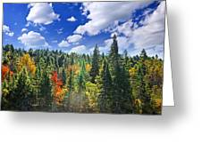 Fall Forest In Sunshine Greeting Card by Elena Elisseeva